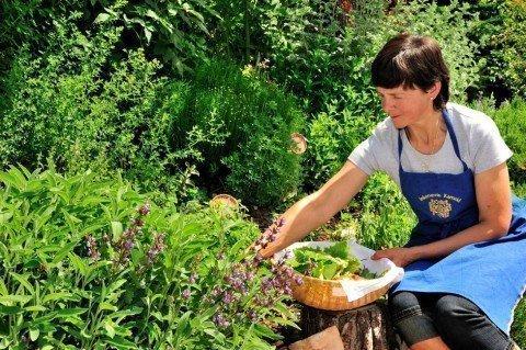 Frische Kräuter aus dem Garten